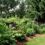 2.2_Perennial-edge-garden