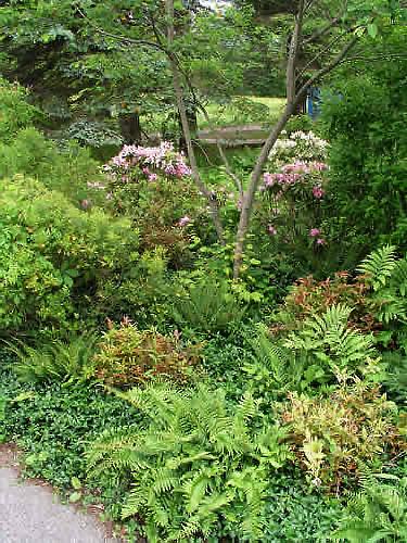 2.2_Perennial-fern-garden