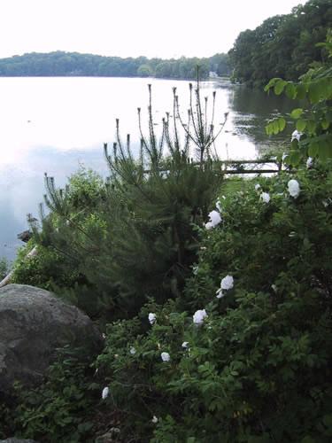 2.2_Perennial-lake-garden