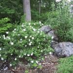 2.6_Stonework_garden-rocks