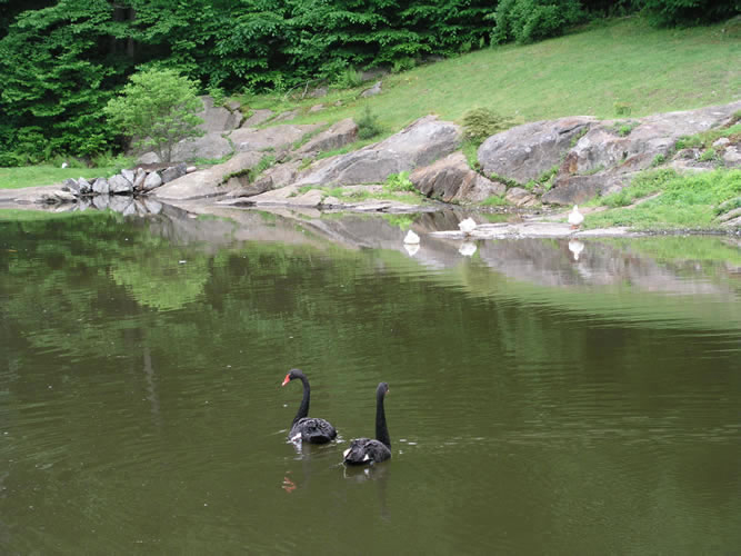 2.7_Water-Features-geese
