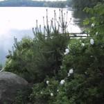 2.7_Water-Features-lake-garden
