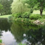 2.7_Water-Features-pond-garden
