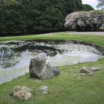 2.7_Water-Features-pond-stones-2