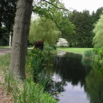 2.7_Water-Features-pond-tree