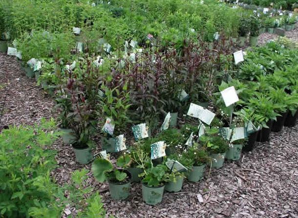 Plants at Native Landscapes